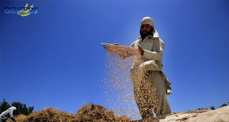 A farmer using a winnowing fan to remove the chaff from the grain